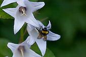 Flowers - Rauberget naturreservat
