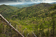 Scenics of Blue Ridge Mountains<br /> Northern Georgia<br /> USA