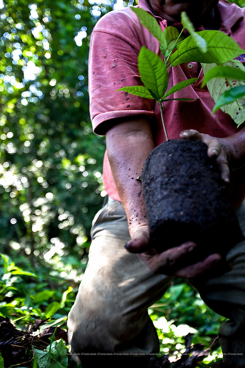 Over the next 10 years, the San Francisco of Asis Agro-ecology Centre (CASFA) hopes to recuperate at least 10,000 hectares currently devoted to rearing livestock and intensive farming in order to plant cocoa.