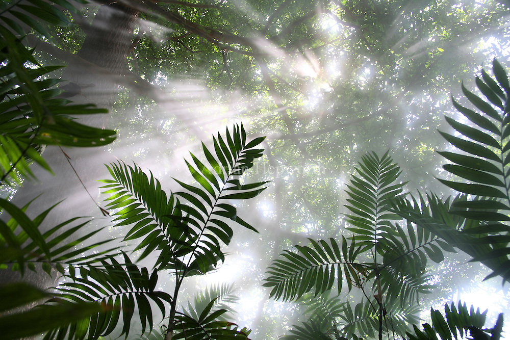 Rainforest with steam from volcanic fumaroles. Rincon de la Vieja National Park, Guanacaste, Costa Rica. <br /> <br /> For pricing click on ADD TO CART (above). We accept payments via PayPal.