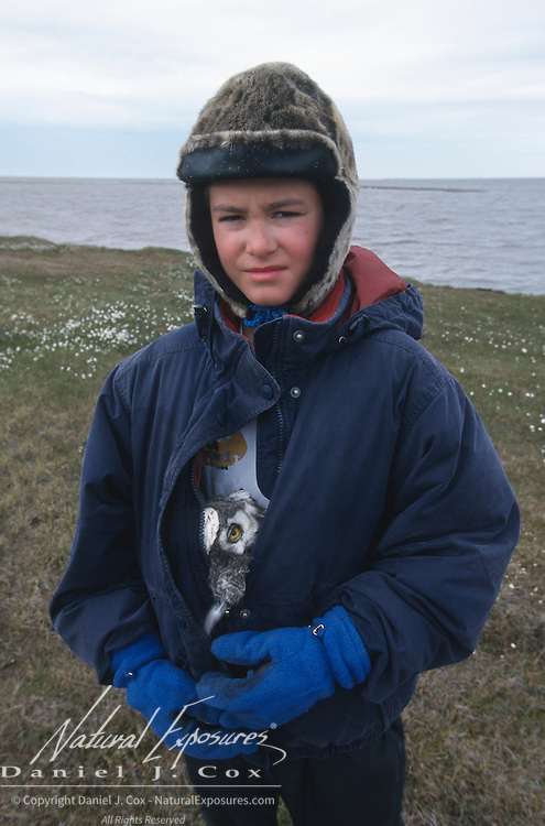 Nuk keeps a chick warm prior to its release. Barrow, Alaska
