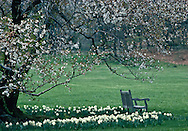 Cherry Blossoms, Bench, National Arboretum, Washington DC, USA