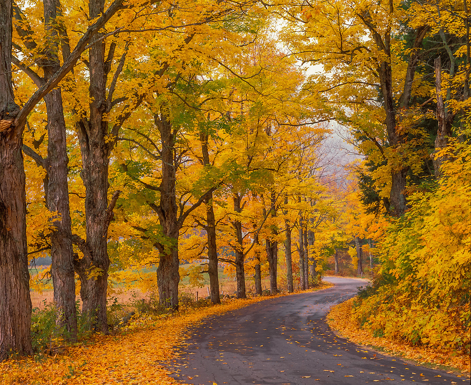 Country road, George Road, lined with Sugar Maples in fall, Hebron, NH