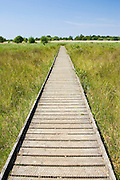 Boardwalk pathway across wetlands at Hickling, Norfolk, United Kingdom