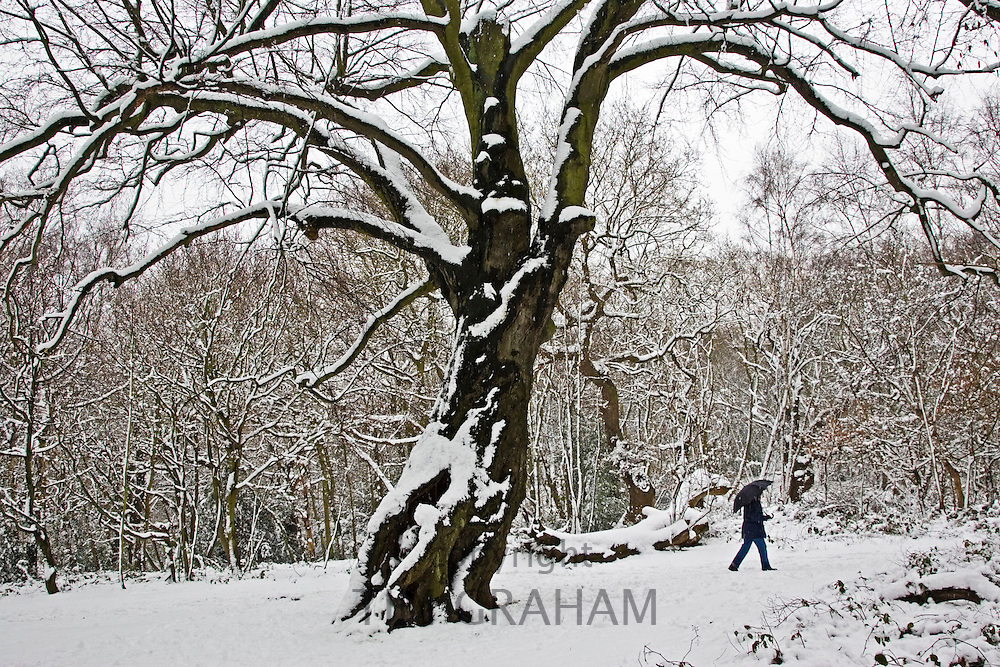 Lone person walks with umbrella across snow-covered Hampstead Heath, London, United Kingdom