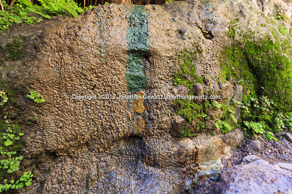 Lichens and mosses on a rock next to Nahal David in the Ein Gedi nature preserve. WATERMARKS WILL NOT APPEAR ON PRINTS OR LICENSED IMAGES.