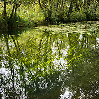 Close up of slow running river with green weeds and reflections