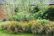 Blackpitts Farm, Towcester, Northamptonshire, England.<br /> Garden design by James Alexander-Sinclair.<br /> Border with Stipa arundinacea, Allium 'Purple Sensation', Anthriscus sylvestris &amp; Salix exigua (Coyote willow, sandbar willow, narrowleaf willow).