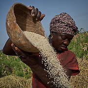 27/10/2019 Kpatia, Ghana: <br /> Talata Musa winnows rice she recently harvested from her farm. Kpatia, Ghana. Talata is the Musa's first wife.