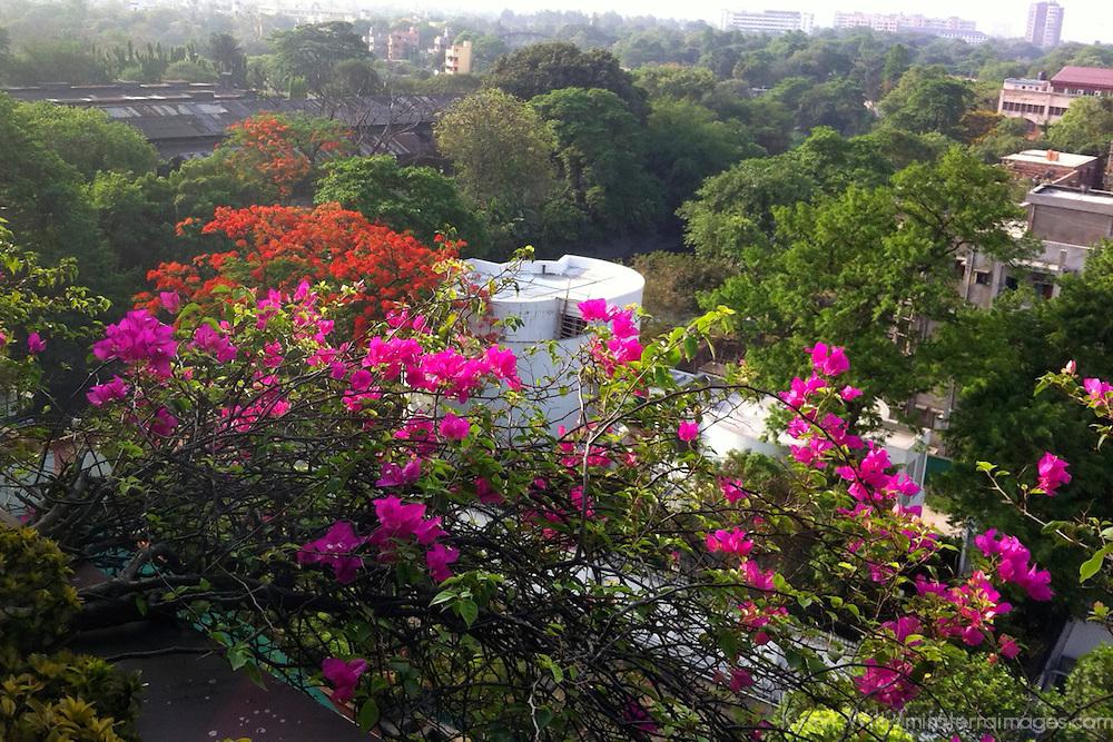 Asia, India, Calcutta. View from the Taj Bengal in Calcutta.