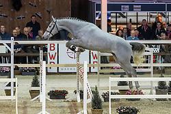 114, Graal Du Talus<br /> Hengstenkeuring BWP - Lier 2019<br /> © Hippo Foto - Dirk Caremans<br /> 18/01/2019