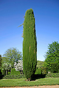 cypress tree in the gardens of eyrignac, france