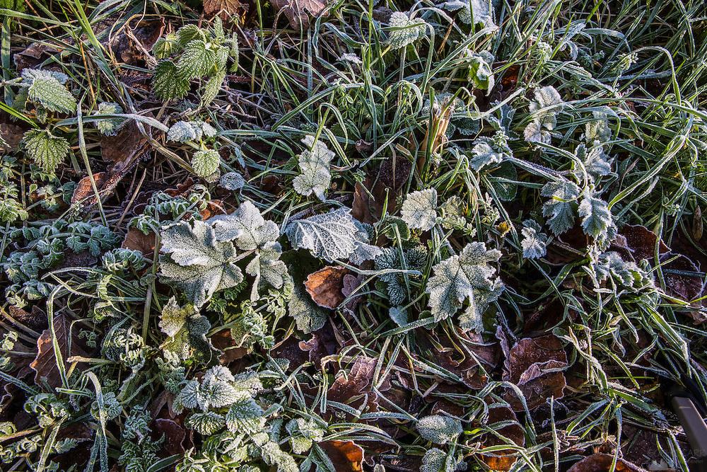 Frosty leaves in Little Chalfont in Bucks