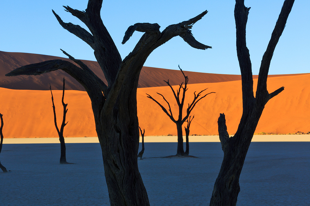 Deadvlei's camelthorn trees have been there for centuries.