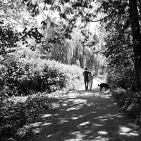 A couple walking a dog in a lush forest setting in dappled sunlight under trees