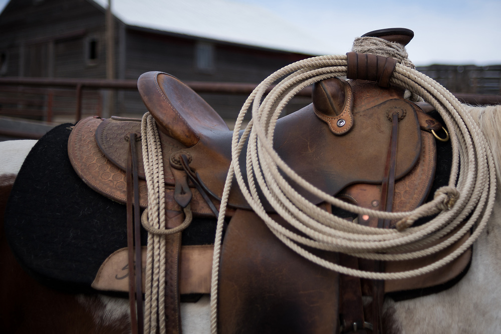 A new lasso hangs tied to a saddle after a long morning sorting cows from calves on land owned by a grazing association west of Meadow, SD on October 8, 2017. Grazing associations provide a way for multiple ranchers to defray the costs of land owning and usage for grazing cattle and on occasion provide access to national grasslands and grazing areas.