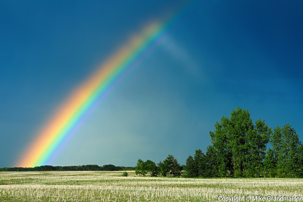 Rainbow and shelterbelt trees<br /> Wroxton<br /> Saskatchewan<br /> Canada