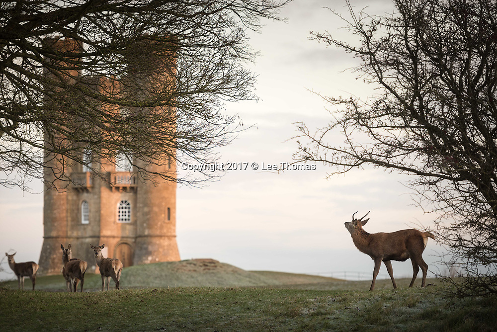 Broadway Tower, Worcestershire, UK. 29th November 2017. Red Deer wake to a frosty morning sunrise in the grounds surrounding Broadway Tower, Worcestershire Cotswolds.   // Lee Thomas, Tel. 07784142973. Email: leepthomas@gmail.com  www.leept.co.uk (0000635435)