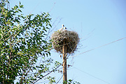 Armenia, Yerevan,  storks nesting on an electric pole