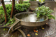 The Water Garden is a series of three cascading stormwater planters on Vine Street in Seattle, performing flow control and treatment for urban runoff in a visible and demonstrative way, bringing public awareness to the City's water conservation efforts.  The Water Garden is set in a curb-extension micro-park within the public right-of-way and treats stormwater that discharges from the Beckoning Cistern, a functional urban stormwater sculpture by Buster Simpson.  The Water Garden features plantings of ferns, shrubs and water plants, designed to provide treatment through biofiltration and other Green Street processes.  The Water Garden is part of the Growing Vine Street Project, a green street initiative in Seattle's Belltown district.