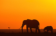 Elephants at dawn, Serengeti National Park, Tanzania.