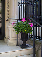Urn with geraniums on the staps of a mansion on 78th street between Madison Ave and Fifth Ave, New York City.