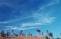 Avskogning.<br /> Foto: Svein Ove Ekornesvåg