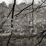 Leaves and Branches, West Branch Housatonic River, Pittsfield, MA