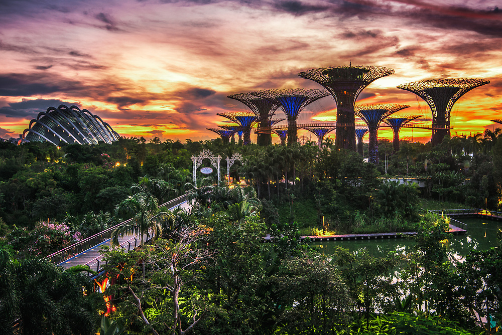 Supertree Grove and Cloud Forest at Gardens by the Bay
