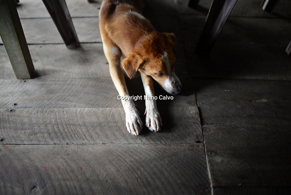 Brown dog laying down under the tables in restaurant, Sri Lanka