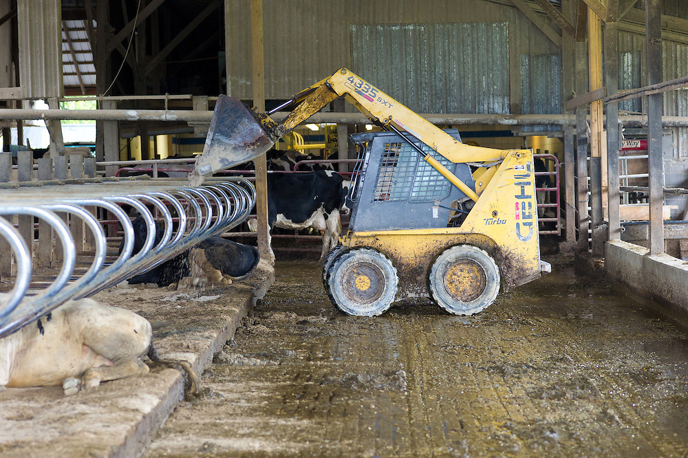 Tractor equipment in use in the stalls of a dairy farm