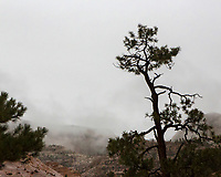 silhouetted tree and fog in Zion National Park