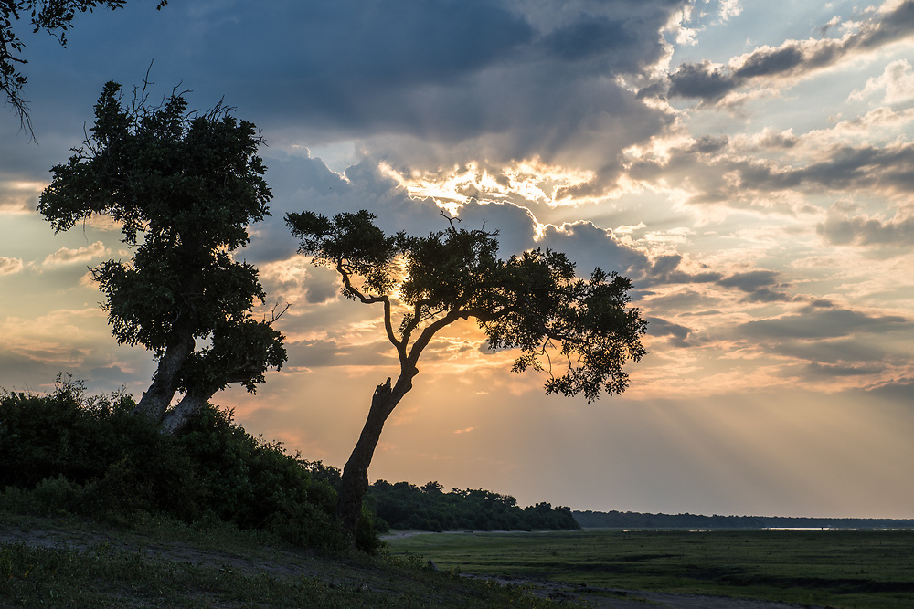 Sunlight breaks through clouds behind silhouetted tree, Chobe National Park - Botswana