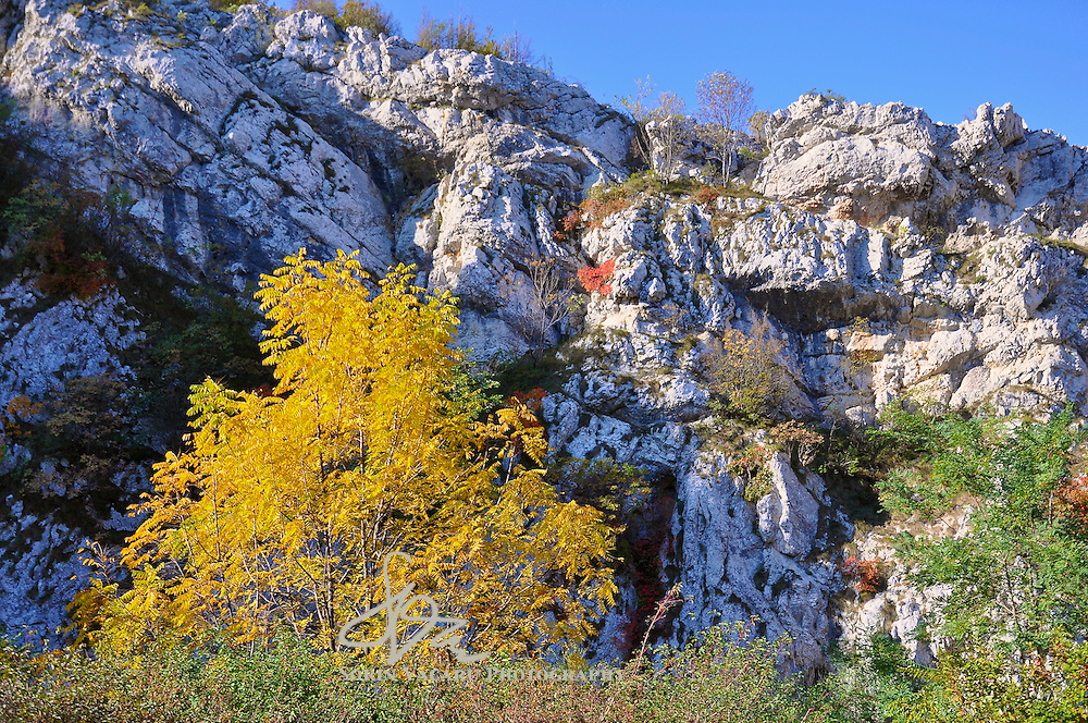 Fall colours decorate the limestone cliffs of the Nera River Gorge.