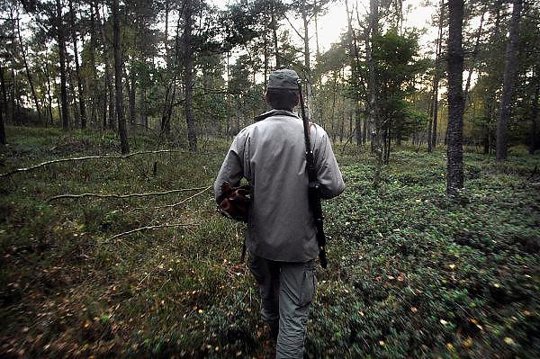 Nederland, Eerbeek, 13-10-2007..Een jager loopt naar een open plek in het bos waar lokvoer is uitgestrooid. Hij zal later vanuit een hut tevergeefs wachten op wilde zwijnen die het voedsel moeten komen eten...Het voedselaanbod voor deze wilde dieren, eikels, is ruim voorhanden zodat ze niet naar de lokplaats komen. ..Foto: Flip Franssen/Hollandse Hoogte
