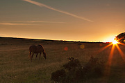 Partial silhouette of a pony near the Triscombe Stone on the Quantocks, near to sunset.