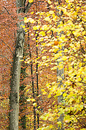 A colorful autumnal forest in Switzerland.<br /> Jura Massif, Switzerland<br /> Canon EOS 1-DX+Canon 100-400 mm f4.5-5.6L IS USM+ 1.4x III<br /> 1/100 s at f/7.1 <br /> ISO 2000<br /> Full frame<br /> No post-processing beyond lens profile and minor dust spotting, global saturation, exposure adjustment, noise reduction and sharpening.