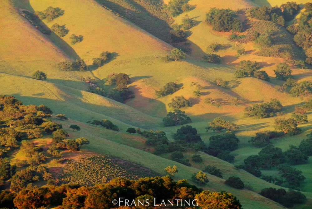 Oak woodland and hills (aerial), Carmel Valley, California