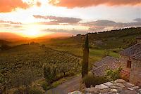 Castellare vineyards, in Chianti Region, Tuscany, Italy