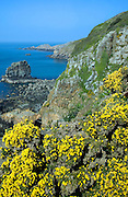 Les Autelets stacks and dramatic coastal scenery west coast of Sark Island, Channel Islands, Great Britain