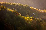 Rhodope Mountains forest at sunset