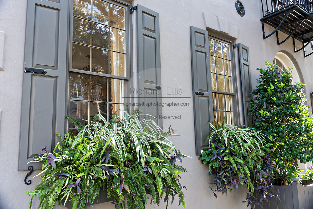 Winter window boxes blooming on a historic home on Meeting Street in Charleston, SC.