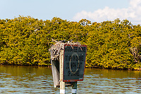 US, Florida. Ten Thousand Islands, Everglades.