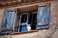cat at the window of the typical south east of france old stone village of ramatuelle near saint tropez on the french riviera