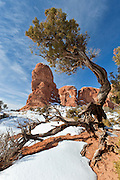 Juniper tree and arch in Arches National Park
