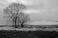 Lonely Trees on Balsfjorden Near Tromsø. Image taken with a Leica X2 camera (ISO 100, 24 mm, f/8, 1/100 sec). In camera B&W.