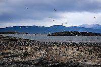 Hundreds of cormorants dotted the numerous islands in the Beagle Channel as our catamoran cruised slowly by.  The Ushuaia Lighthouse stands in the background on another nearby rocky island.  The channel is named after the HMS Beagle, the ship that carried the English naturalist, Charles Darwin, on a five year voyage around the southern tip of South America.