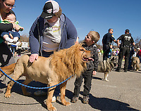 Amy Fedorczuk's Golden Retreiver Shadow gives more of a purr than a roar as he's given a pat by Barbara and Brian Hollins as dogs gather for Saturday mornings annual Bow WOW Fest.   (Karen Bobotas/for the Laconia Daily Sun)