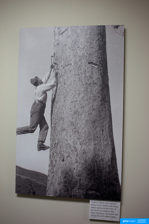 An historical Tudor Collins photograph at the Kauri Museum, Matakohe, Northland. The Kauri Museum  gives insight into Northland's pioneer past. and the ancient kauri trees in the Waipoua Forest. . The Kauri Museum, Matakohe tells the fascinating story of the pioneering days through the use of kauri timber and kauri gum. The Museum has many exceptional displays and galleries and a magnificent collection of antique kauri furniture and the largest collection of kauri gum in the world, along with restored machinery, including NZ's earliest tractor, a 1929 Cat 60, and a turning steam sawmill. The Kauri Museum, Northland, Matakohe. 22nd November 2010. Photo Tim Clayton