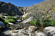 Tahquitz Canyon Creek Palm Springs